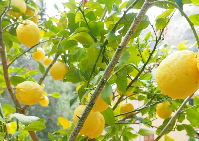 Purelia Saunaaufguss Duft 50 ml Lemongras - Saunaduft